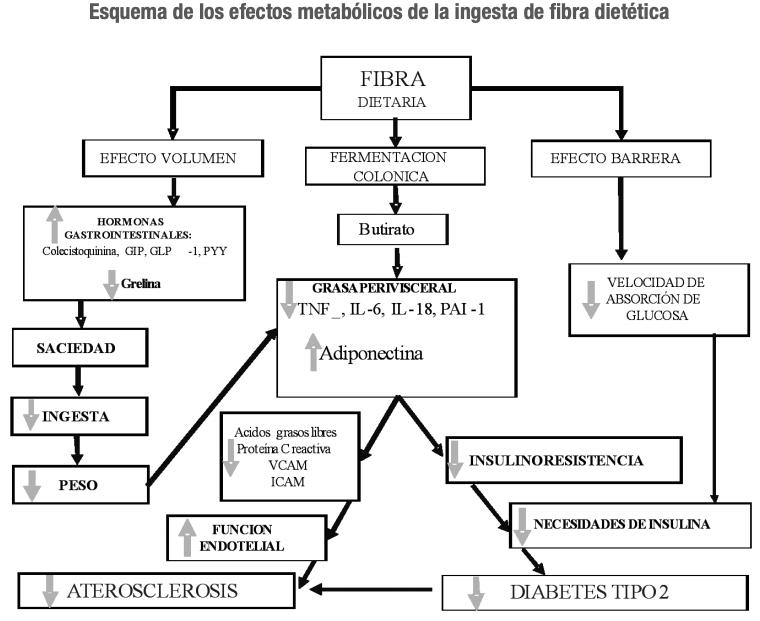 Efectos metabolicos de la fibra